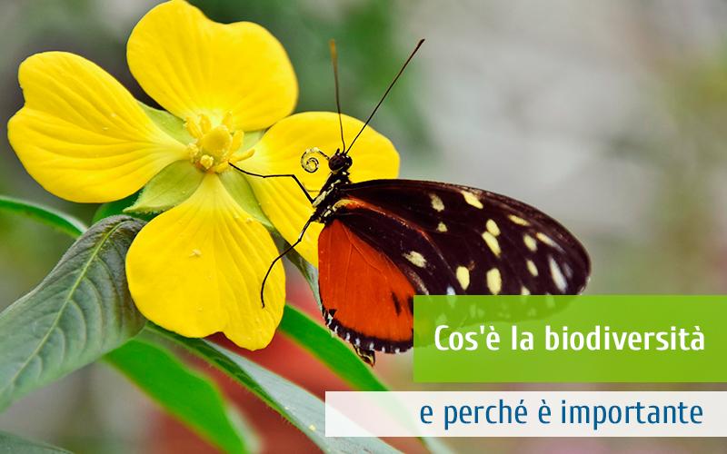 Cos'è la biodiversità e perché è importante